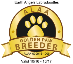 gold-paw